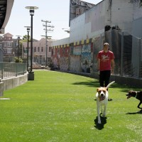 Things to Do in San Francisco: Stuff Vintage and a Dog Park